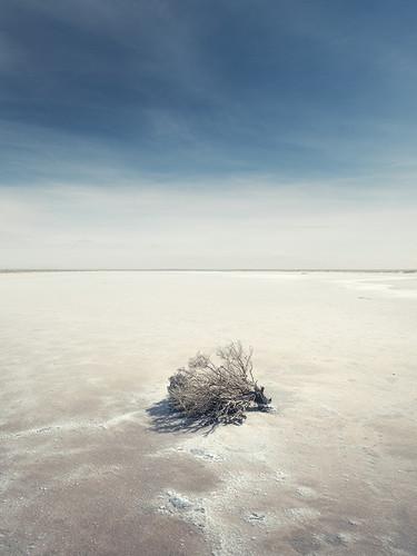 Photography   Salt Bush    by Nick Psomiadis