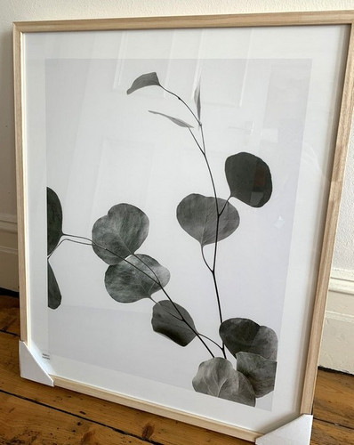 Framed Print | Eucalyptus Branch in Oak Frame 1