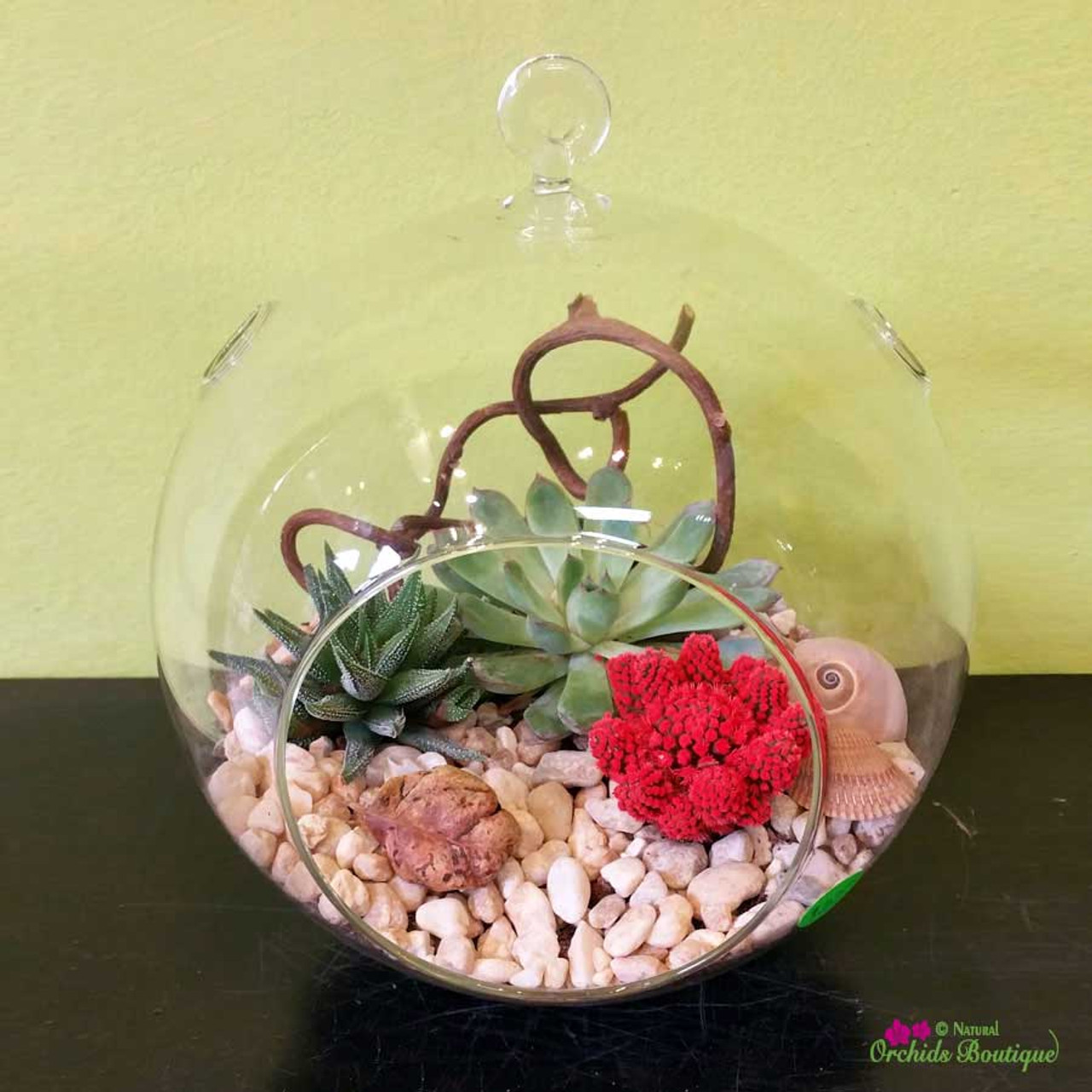 Round Is The Earth Hanging Terrarium Natural Orchids Boutique