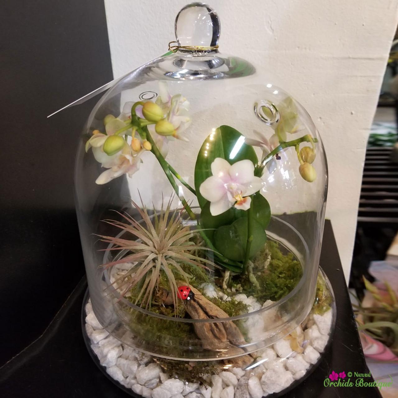 Keep Me Warm Mini Orchid Terrarium Natural Orchids Boutique