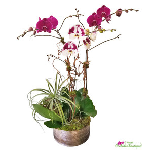 Into Purples Phalaenopsis Orchid Arrangement