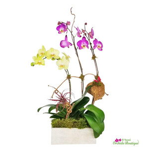 Rustic Beauty Phalaenopsis Orchid Arrangement
