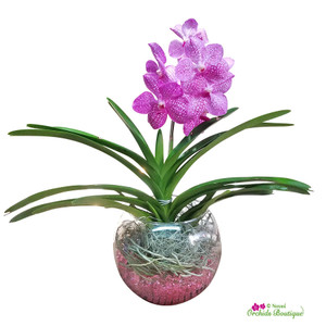 Exotic Vanda Orchid In Glass Vase
