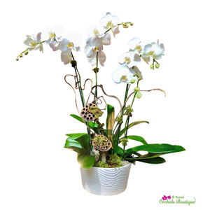 White In The Mix Phalaenopsis Orchid Arrangement