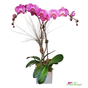 Modern Is The Most Phalaenopsis Orchid Arrangement