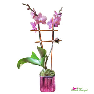 Meet You In The Park Phalaenopsis Orchid Arrangement