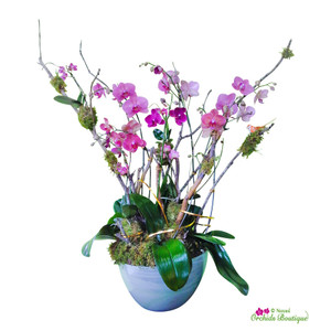 Passion Mix Phalaenopsis Orchid Arrangement