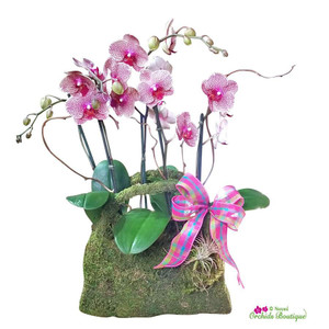 Fashion Natural Moss Purse Phalaenopsis Orchid Arrangement