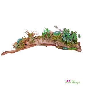 Exotic Grapewood Succulents Terrarium