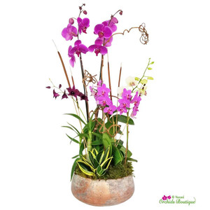 Majestic Fall Orchid Arrangement
