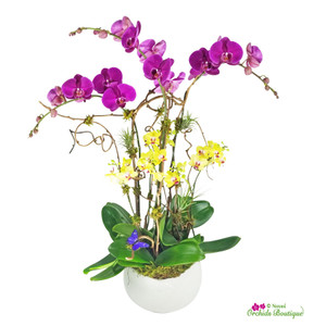 Modern Deep Colors Phalaenopsis Orchid Arrangement