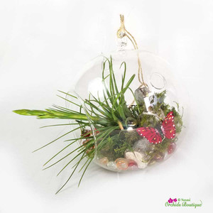 Crystal Glass Hanging Air Plant Terrarium