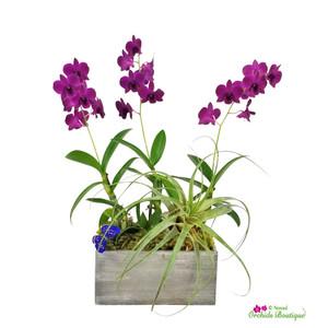 Deep In Love Dendrobium Orchid Arrangement