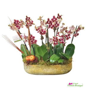 Falling Into Fall Phalaenopsis Orchid Arrangement