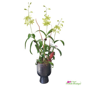 Thinking Of You Dendrobium Orchid Arrangement