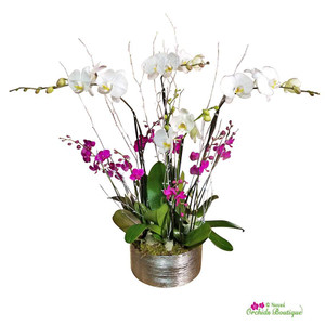 Shine Bright Like A Diamond Phalaenopsis Orchid Arrangement
