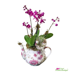 Tea Time With Nature Mini Phalaenopsis Orchid Arrangement