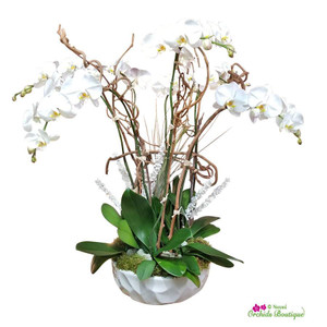 Snow Day Phalaenopsis Holiday Orchid Arrangement