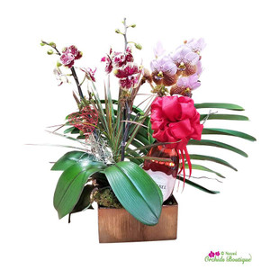 Exotic Modern Vanda And Phalaenopsis Mix Orchid Arrangement