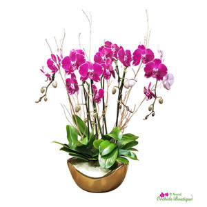 Pure Love Phalaenopsis Orchid Arrangement