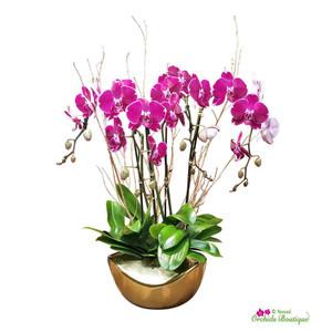Pure Love Phalaenopsis Orchid Arrangement