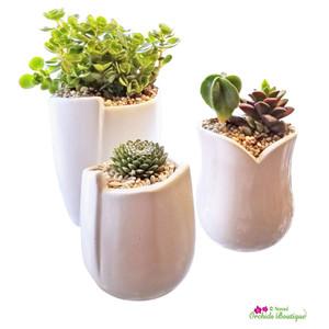 Modern Succulent Trio Terrarium