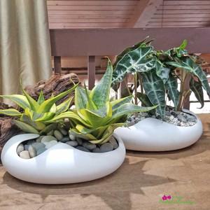 Modern Assorted Foliage Terrarium