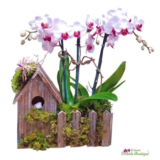Lovely Bird House Phalaenopsis Orchid Arrangement