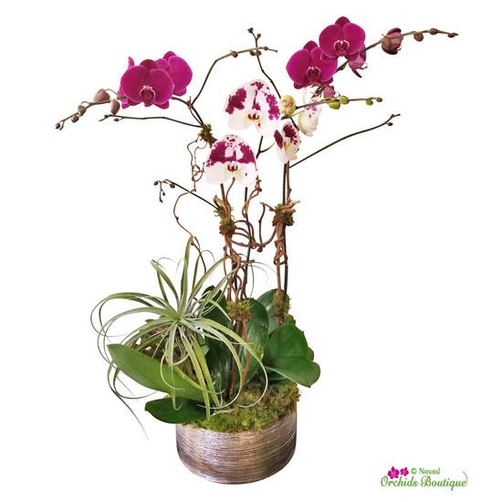 Into Purples Phalaenopsis Orchid Arrangement