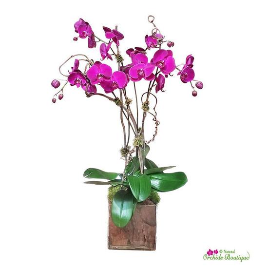 Modern Sophisticated Phalaenopsis Orchid Arrangement