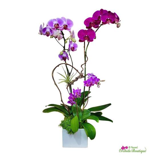 Elegant And Delicate Phalaenopsis Orchid Arrangement