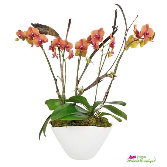 Deep Into Earth Phalaenopsis Orchid Arrangement