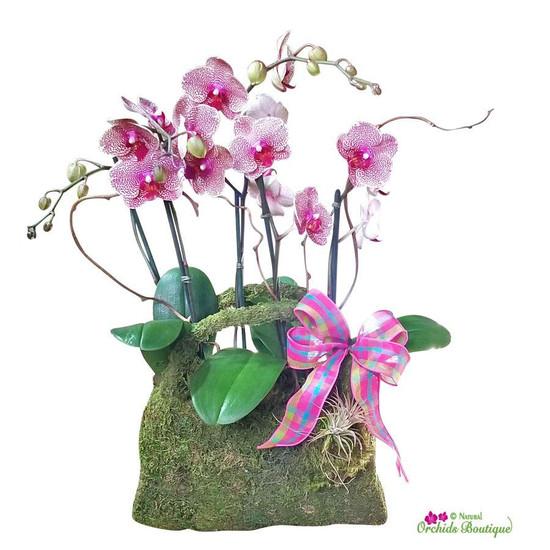 Fashion Natural Moss Purse Phalaenopsis Orchid Arrangement