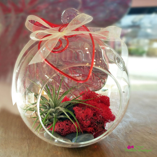 Love What You See Hanging Terrarium