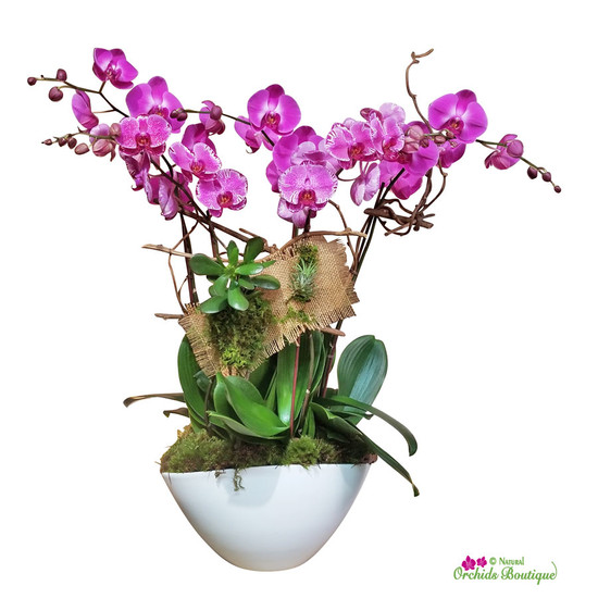 Exotic Jungle Phalaenopsis Orchid Arrangement