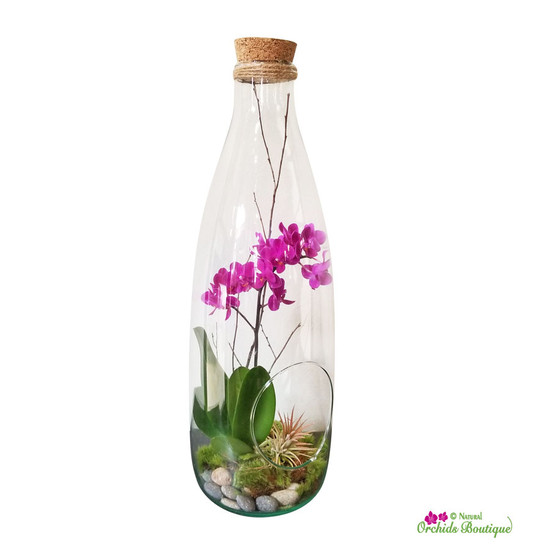 A Bottle Filled With Nature Mini Phalaenopsis Orchid Arrangement