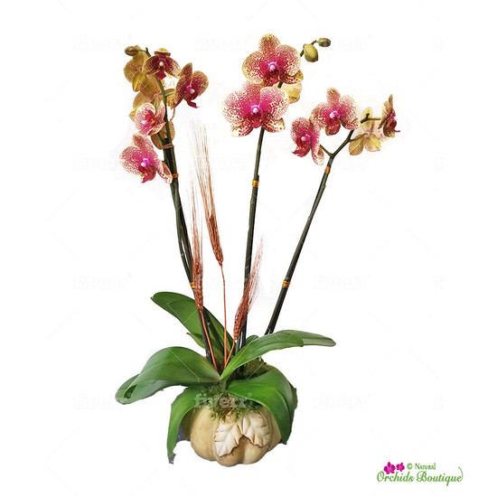 Fall Is Just Here Phalaenopsis Orchid Arrangement