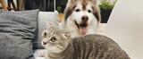 10 puntos a tener en cuenta a la hora de elegir la alimentación de tu mascota
