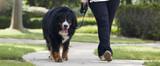 Así es cómo tu perro puede adelgazar de forma eficaz y adecuada