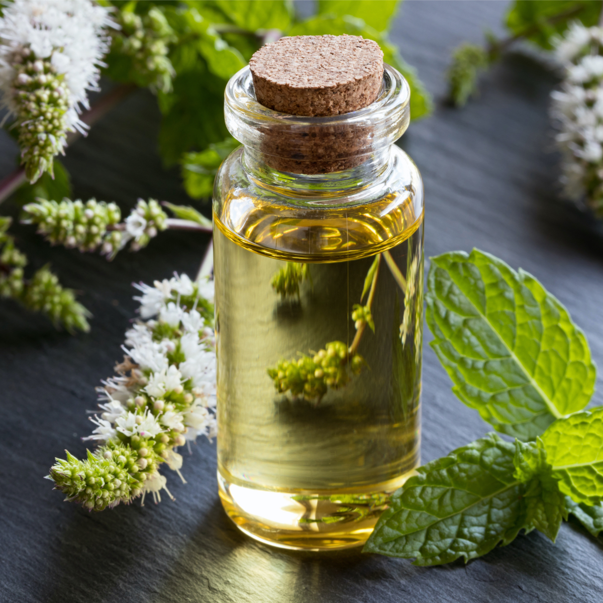 Peppermint essential oil used in our foot care products