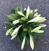 Vase of white lilies