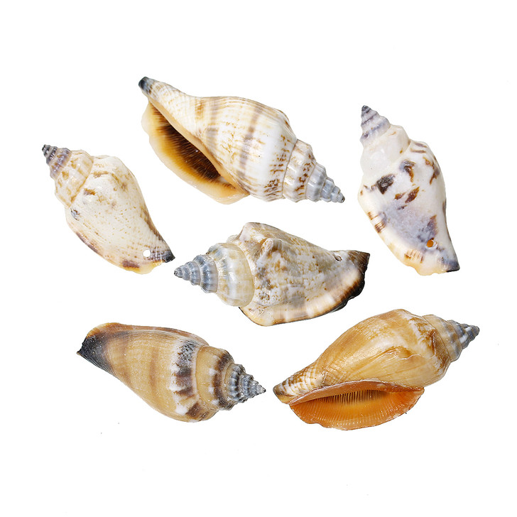 Sea Shell Conch Embellishment Findings Natural Light Spiral
