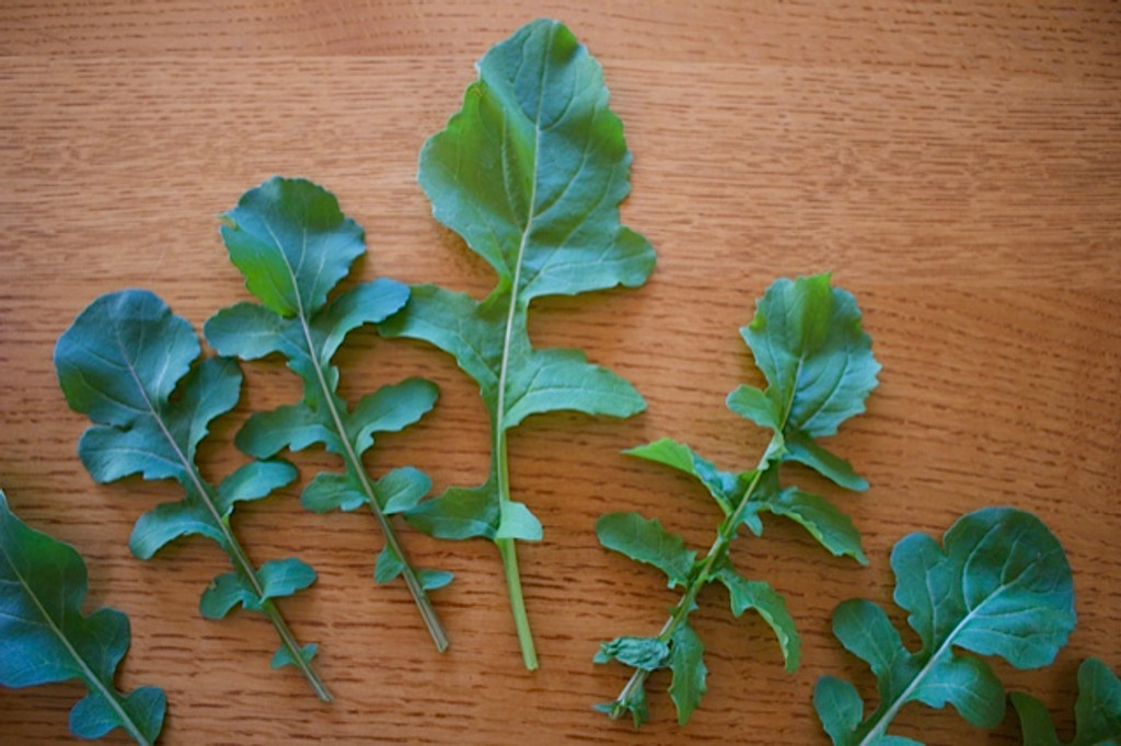 The toothed leaves of Arugula Coltivata should be harvested when 3-6 inches long for the best flavor.