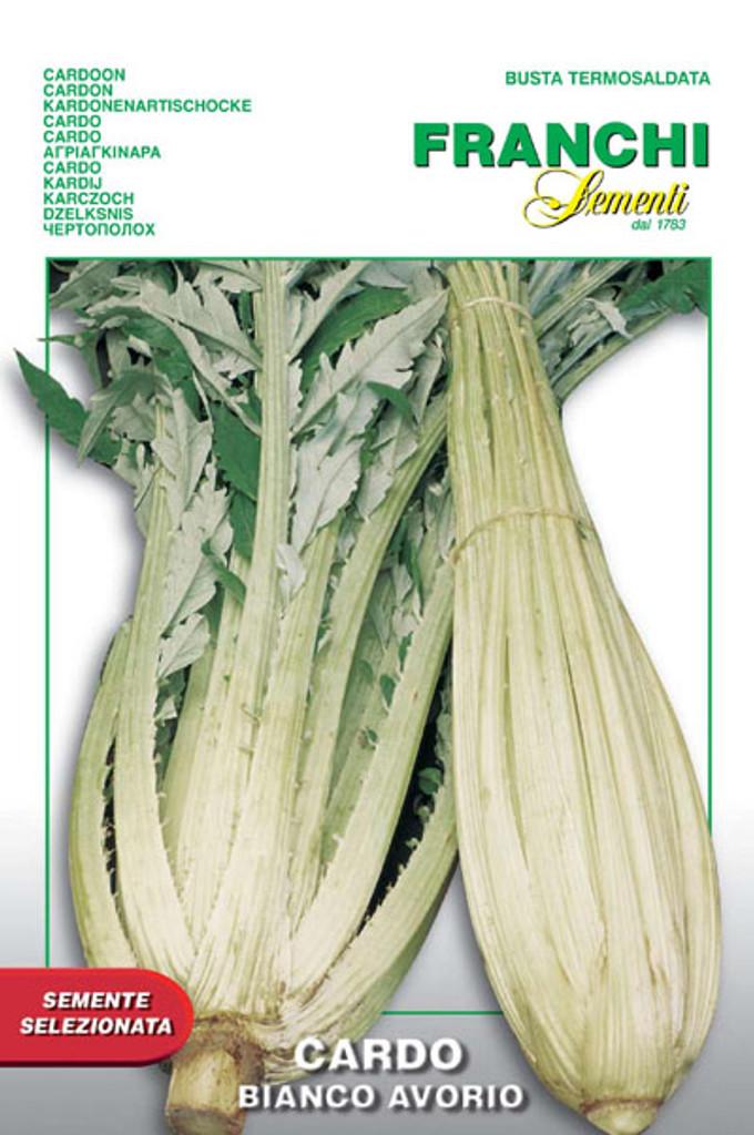 Cardoon - Bianco Avorio (22-1)
