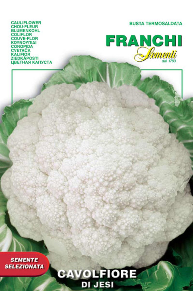 Cauliflower - di Jesi (30-15)