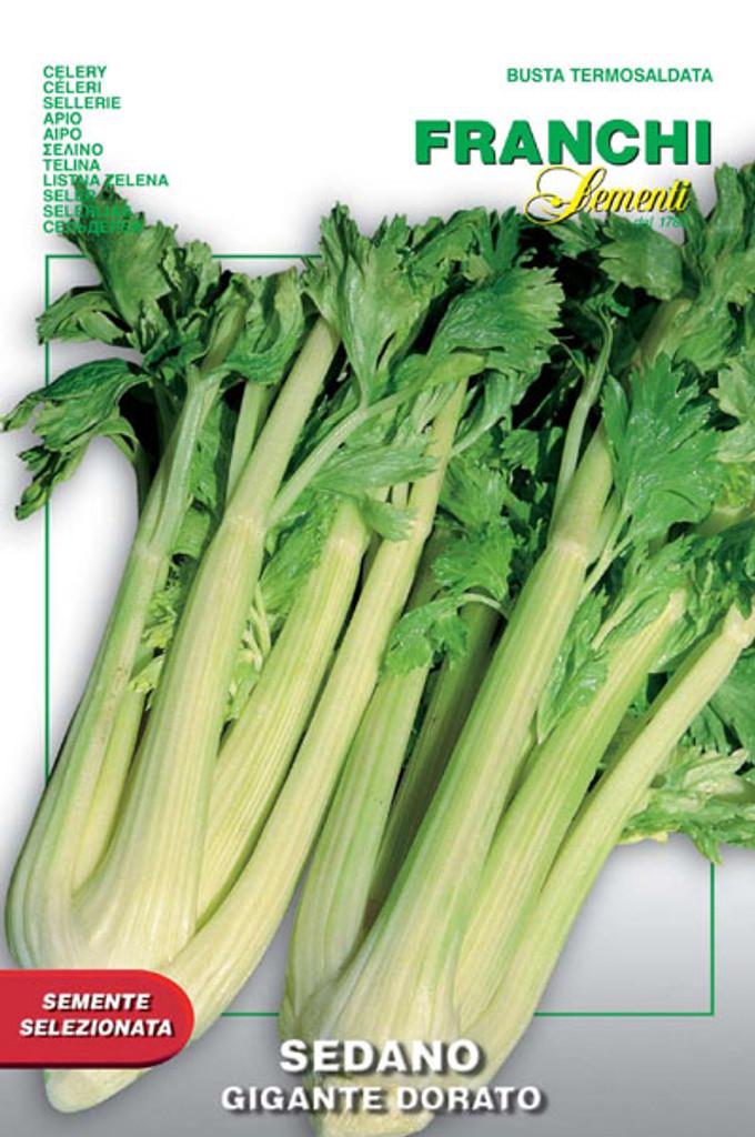 Celery Dorato Gigante 2 (124-19)