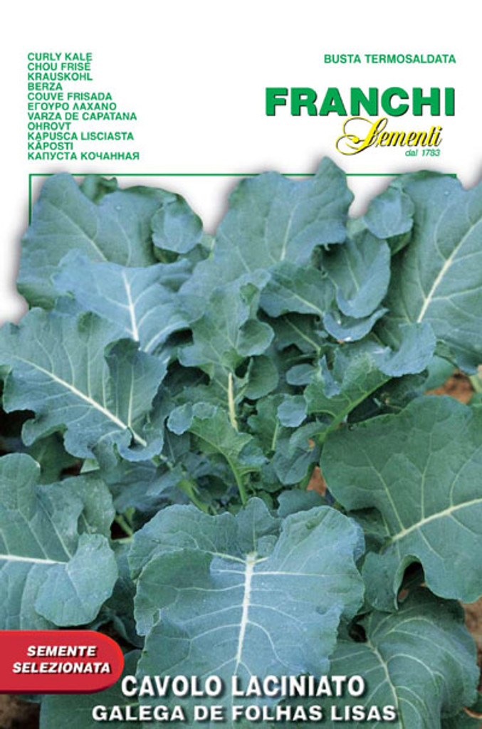 Lacinato Kale - Galega de Folhas Lisas