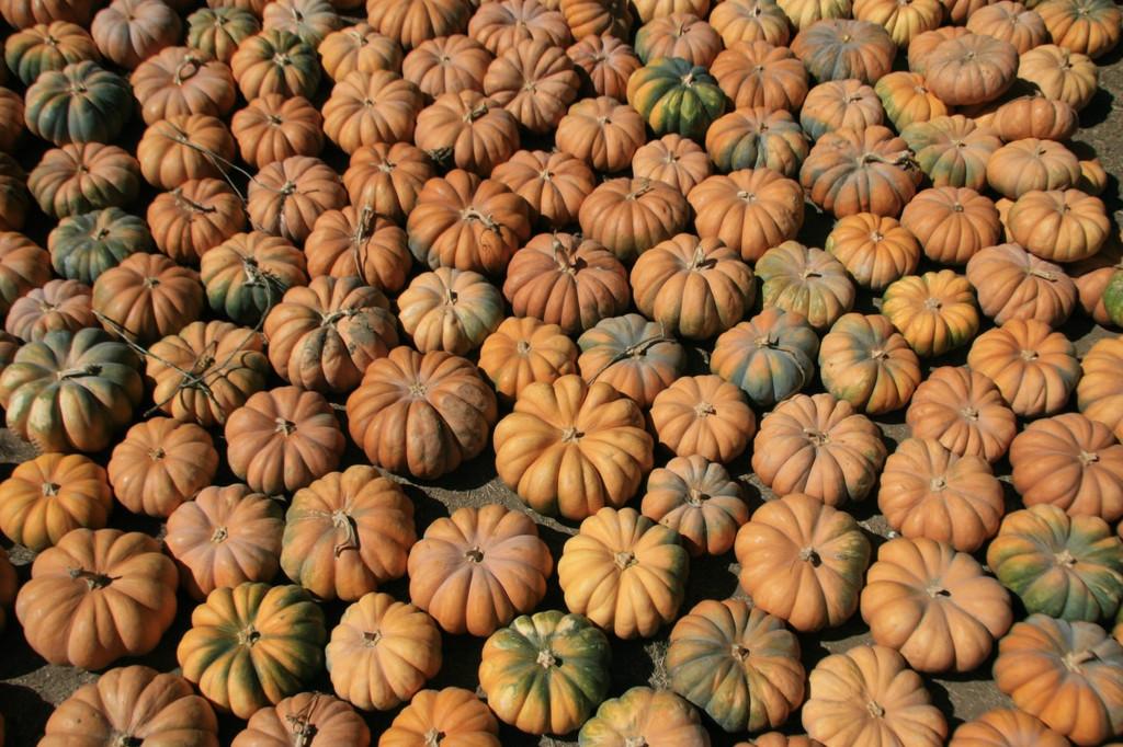 Fall Harvest Moscade de Provence - Mariquita Farm