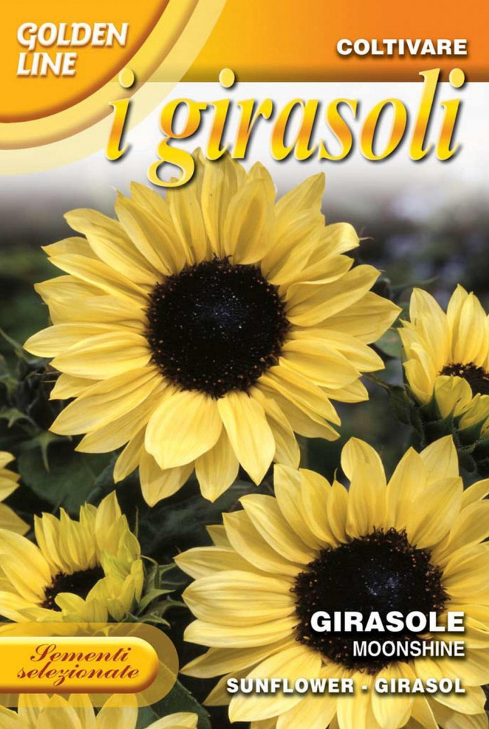 Sunflower Lemon Leopold (329-7)
