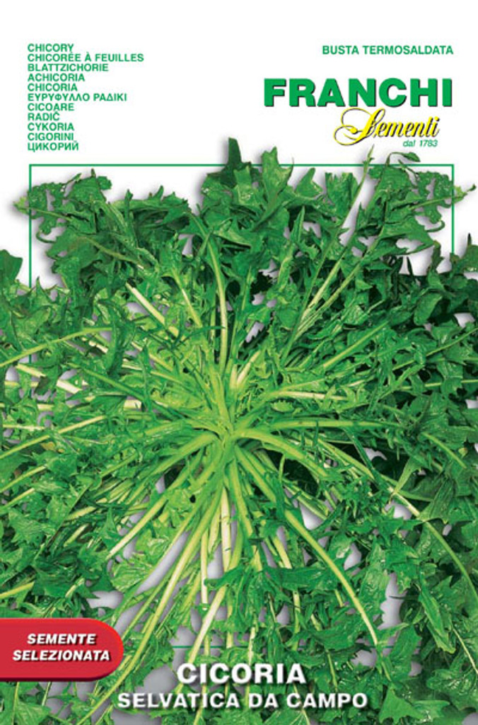 Chicory, Wild Selvatica da Campo (40-12)
